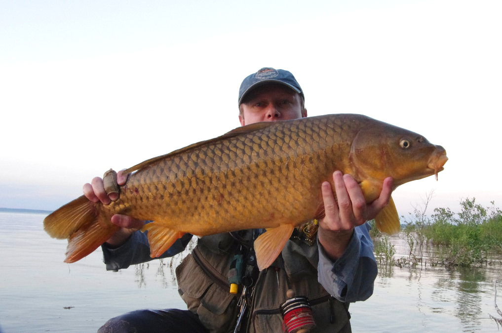f9e46c85e2 GREAT LAKES CARP  LESSONS FROM CARP FLY FISHING