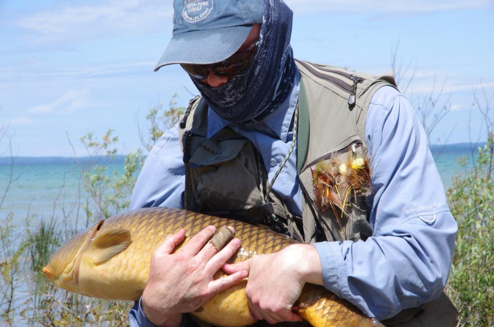 Fly fishing for big carp