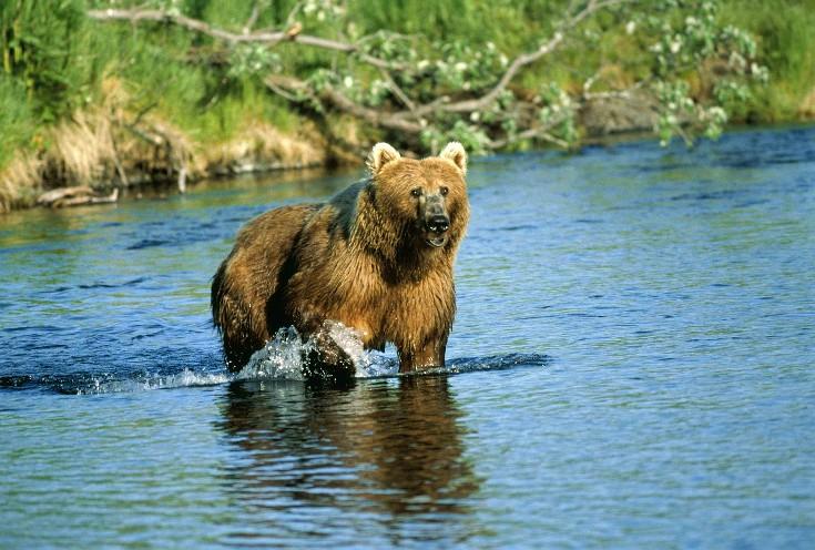 Travel and shipping bear spray in Alaska.