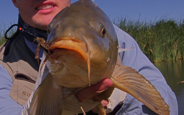 Carp fly fishing.