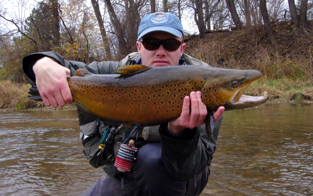 Fly fishing nymphs in clear water brown trout.