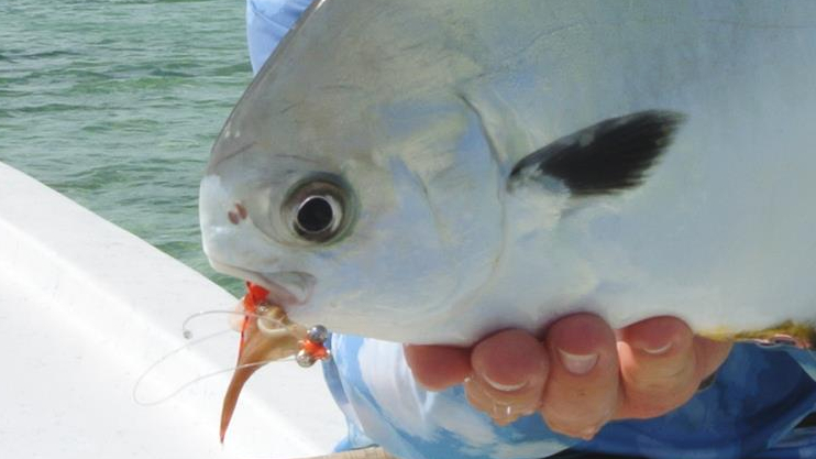 Fly fishing for permit in Belize.