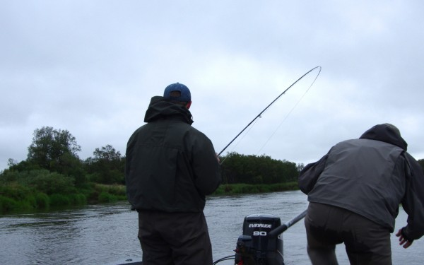 Fly fishing tippet.
