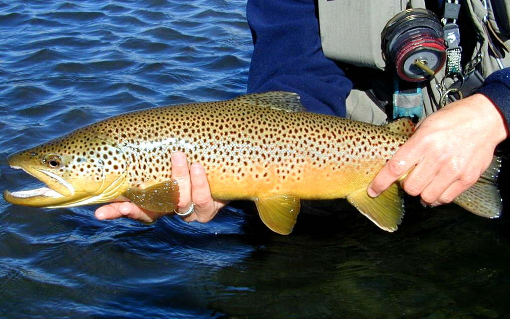 Fly fishing with nymphs.