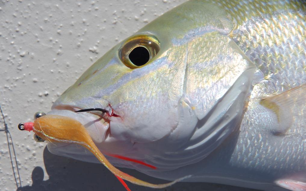 Fly fishing hook size snapper.