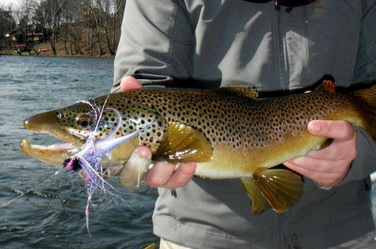 Streamer fishing snap pause brown trout.