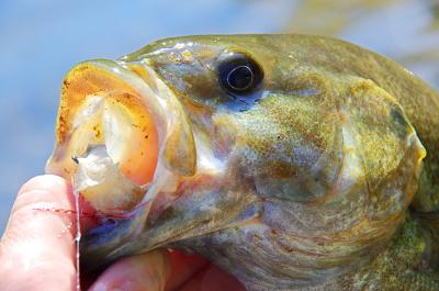 Fly fishing optin.