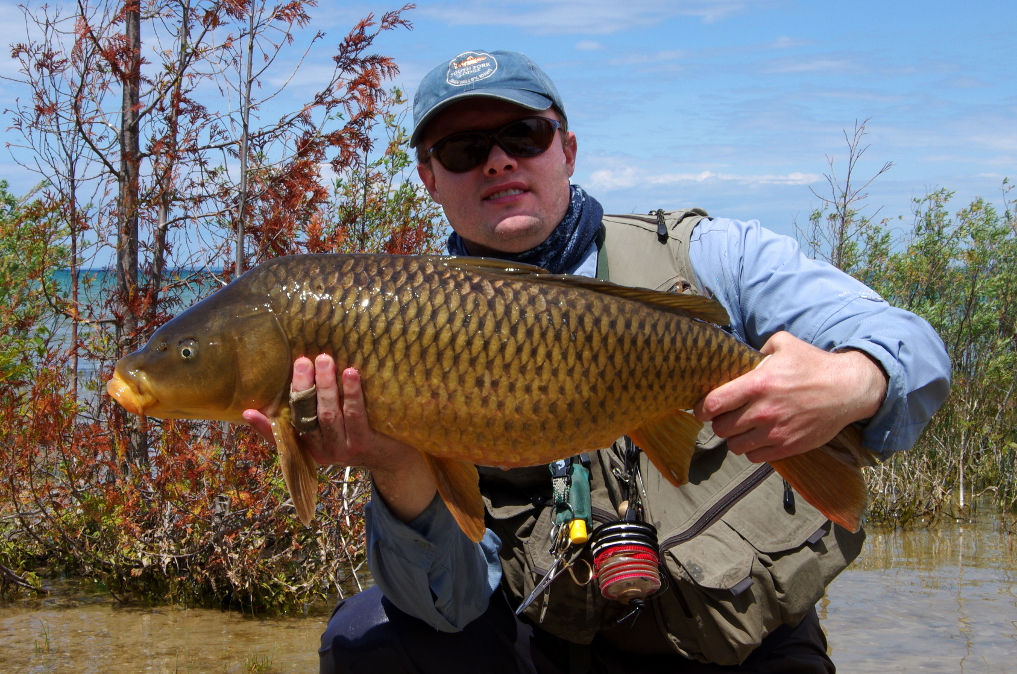 Great Lakes carp on the fly.