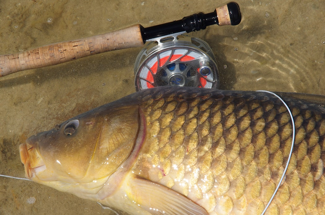 Rods and Reels for carp fly fishing