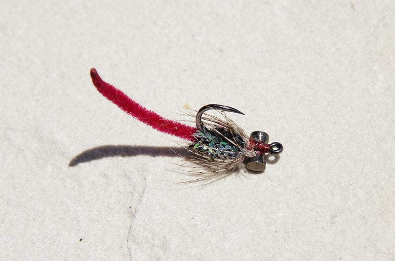Hybrid Carp Fly